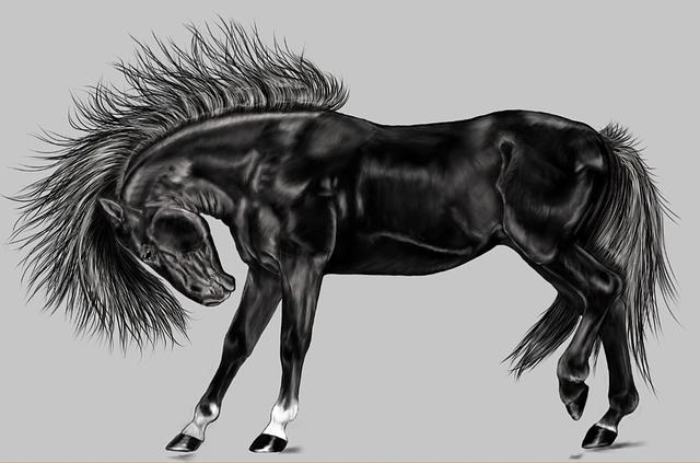 černý kůň